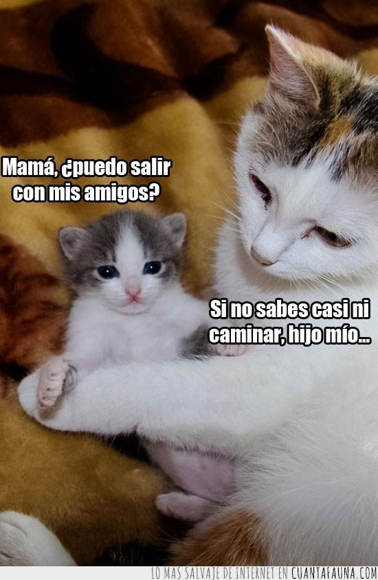 amigos,cachorro,caminar,cría,Gatito,madre,mamá,puedo salir