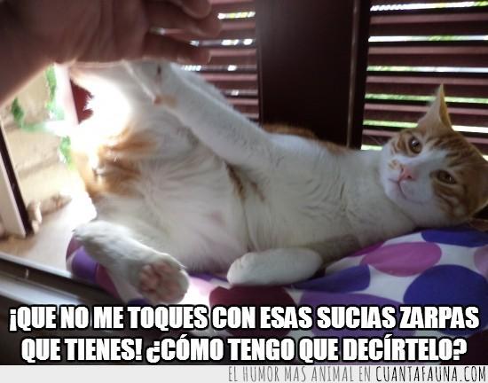aparta eso de mi,gato,humano,manos,no tocar,zarpas