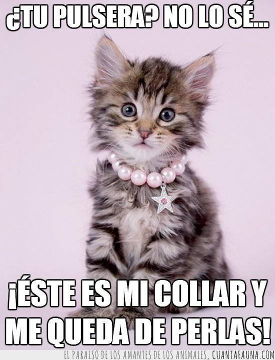 Collar,diamantes,estrella,gatito,gato,ignorancia,monada,perder,perlas,pulsera