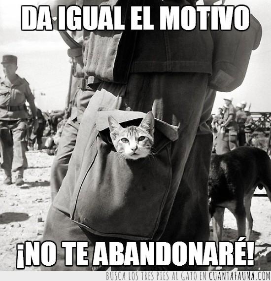 abandonar,amo,forever,Gato,guerra,juntos,separar,siempre,soldado,together