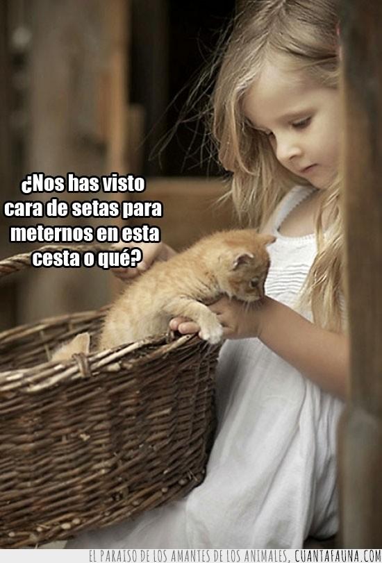 canasto,descubrir,gatito,infancia,mundo,Niña,rubia