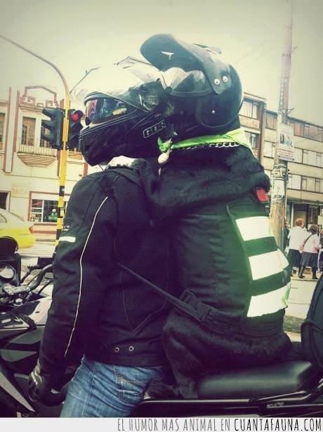 can,casco,fidelidad,gafas,mascota,mochila,motocicleta,motorista,perro,protección,seguridad