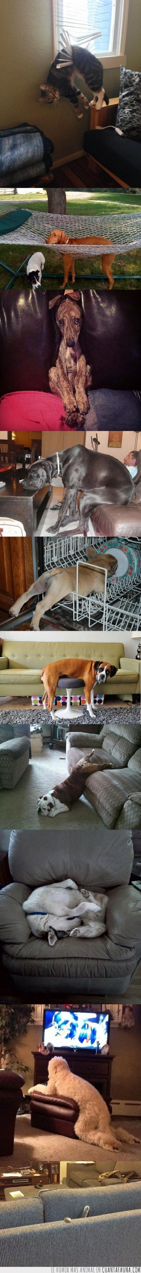aprietos,banco,colgado,comodidad,dormir,gato,grande,hamaca,humor,lavaplatos,mascota,mueble,pequeño,perro,sillón,travesura,ventana,ver tele