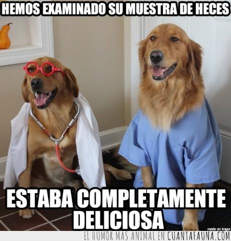 caca,comer,doctor,heces,medico,mierda,muestra,perro