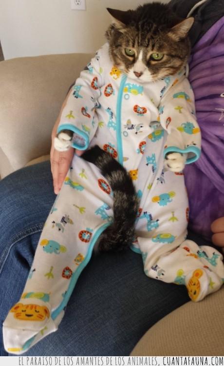 bebé,felino,gato,humano,mameluco,mimado,niño,persona,pijama,traje
