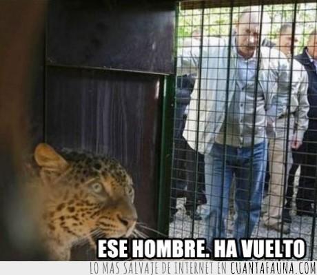guepardo,leopardo,miedo,putin,terror,zoo
