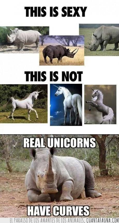 bonito,curvas,ellos las prefieren gordas,gorditos,que haya,que haya donde por donde agrrar,Rinoceronte