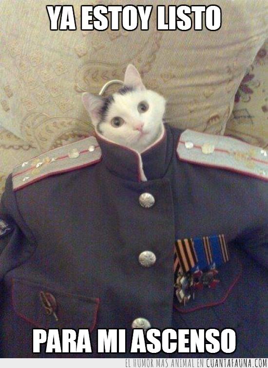 ascenso,gato,general por lo menos,militar,soldado,uniforme