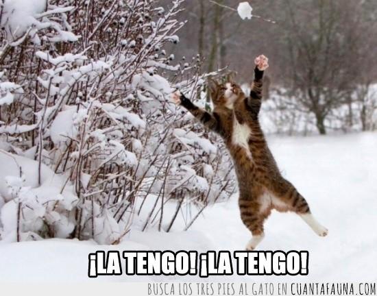 atrapar,bola de nieve,gato