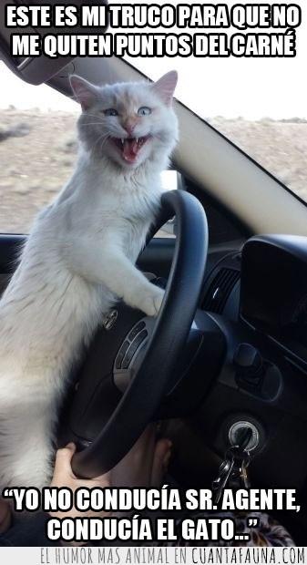 coche,conducir,puntos,quitar puntos,volante