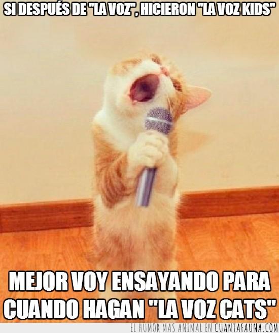cantar,gato,la voz cats,microfono