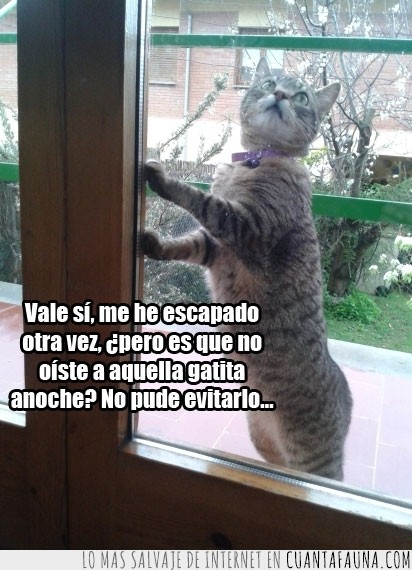 entrar,escapar,evitar,gatita,ventana