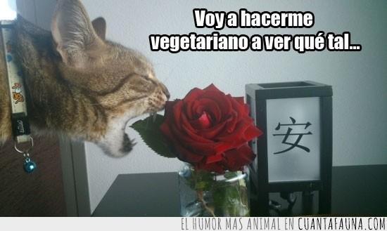 come,flor,planta,rosa,vegetariano