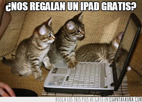 anuncio,gatos,inexpertos,internet,picar,trampa