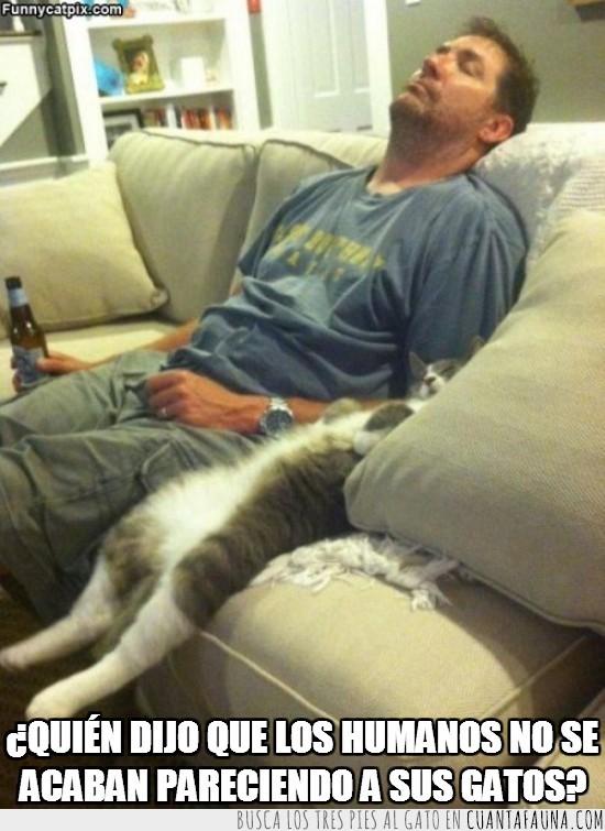 clavaos,dueños,estirados,gatos,humanos,sirvientes,sofa,tumbados