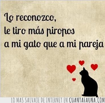 forever alone,gato,pareja,piropos