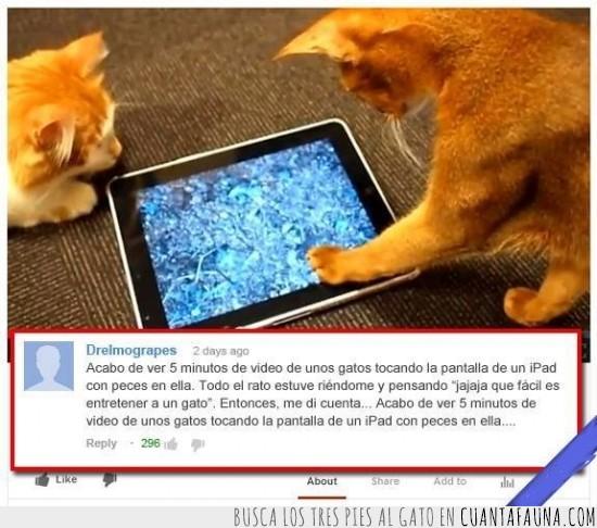 comentario,gato,gatos,manipular,youtube