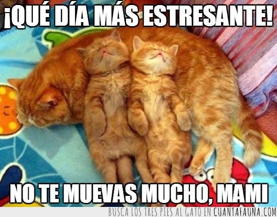 almohada,descansar,estrés,gatitos,madre,tumbados