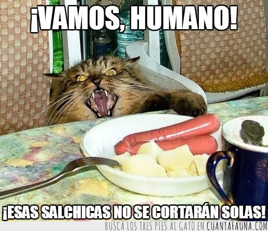 comida,cortar,enfadado,gato,hambre,mala leche,salchicas