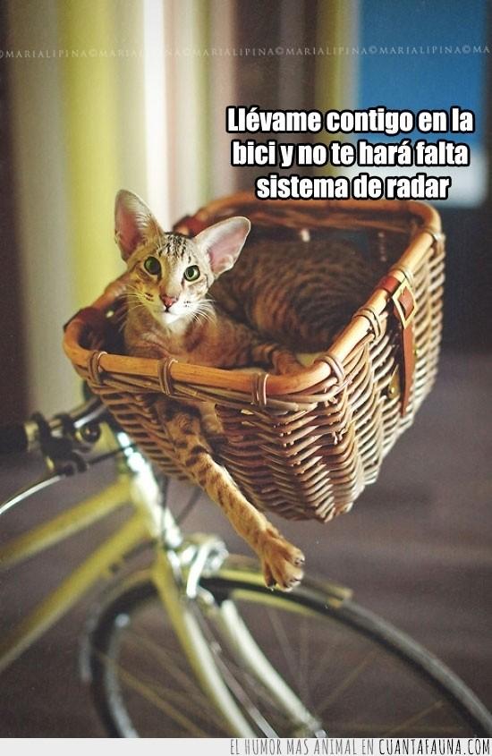 acompañar,bici,cesta,Gato,humano,ir,orejas,radar