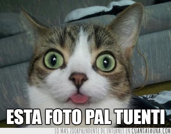 foto pal tuenti,lengua fuera,ojos abiertos,selfie gato