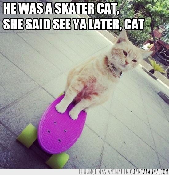 cancion,gato,letra,skate,skater,skater boy,style