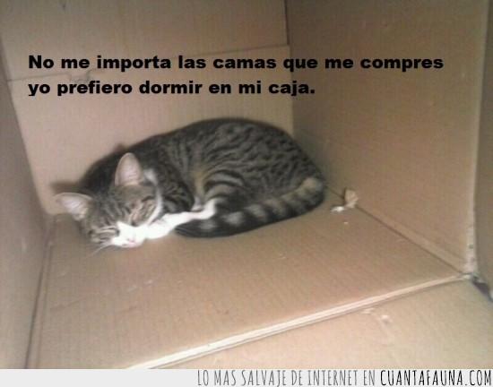 caja,dormir,gato