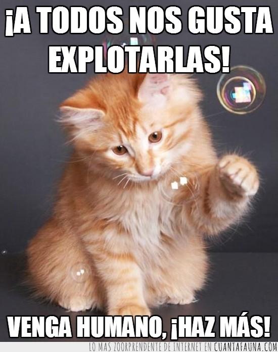 aire,burbujas,divertir,entretener,explotar,gato,humano,infancia,jabón,juego,obedecer,orden,pompas