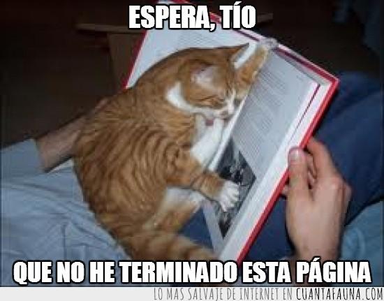espera,gato lector,leer,leyendo,libro