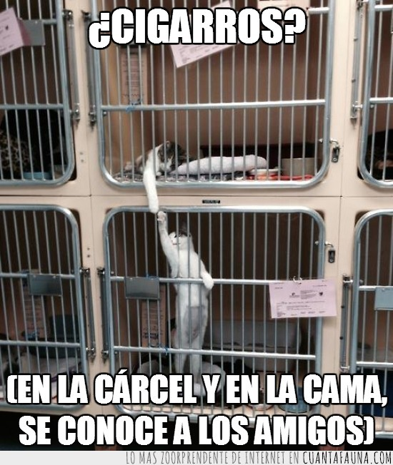 amigos,carcel,gato,gatos
