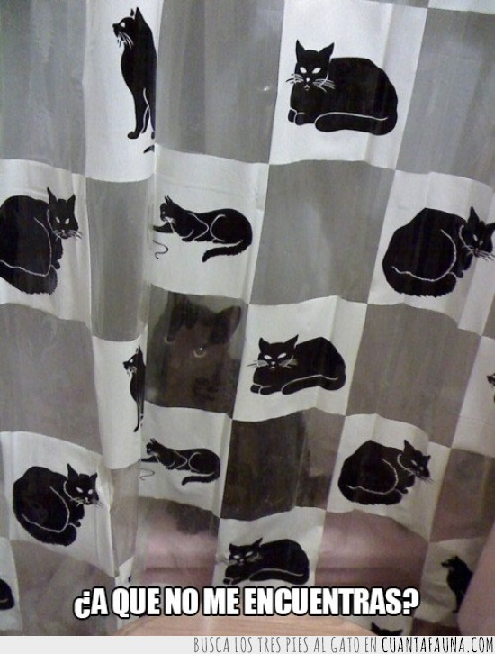 cortinas,ducha,escondido,gato