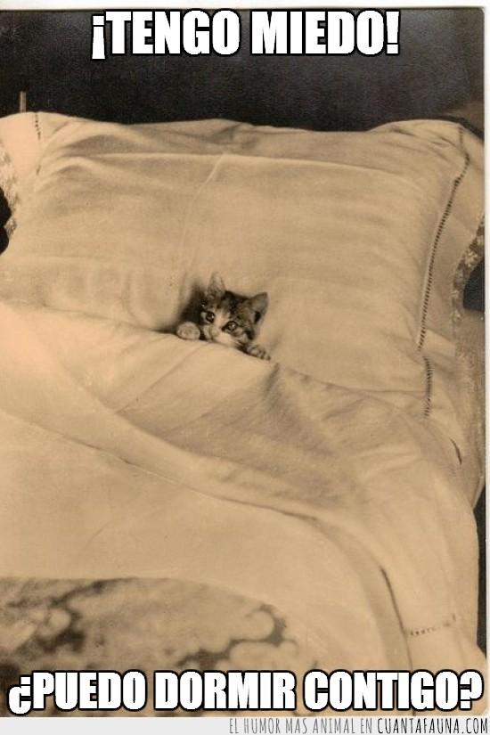 afirmación,almohada,cama,compañía,dormir,gatito,Gato,miedo,pesadilla,petición,por supuesto,sábanas,soñar
