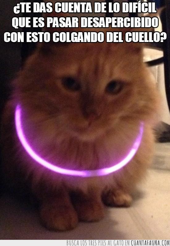 brillante,collar,fluorescente,gato,moda,neón,pulsera