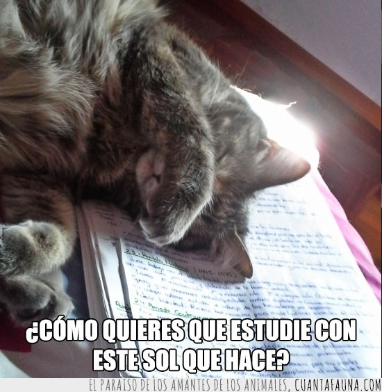 apuntes,estudiar,exámenes,gato,taparojos