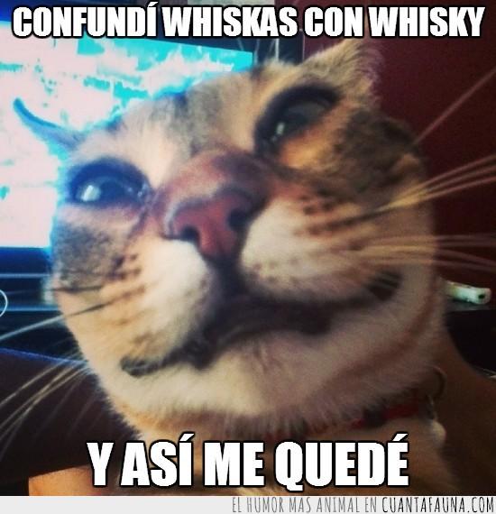 borracho,confundir,gato,whiskas,whisky