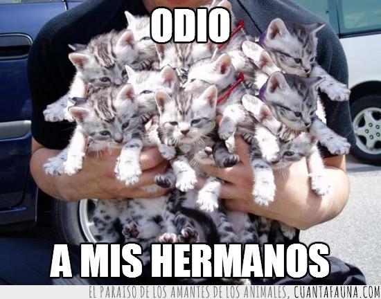 gatos,grupo,hermanos,manada