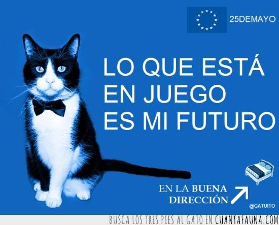 buena dirección,diversión,elecciones europeas,gato,gatos,política