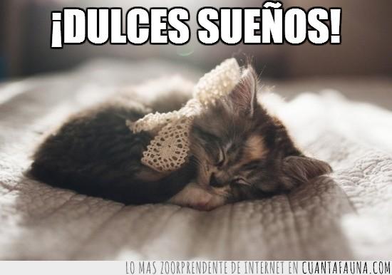 buenas,cama,desear,Dormir,dulces,gatito,lazo,noches,sábanas,soñar,sueños