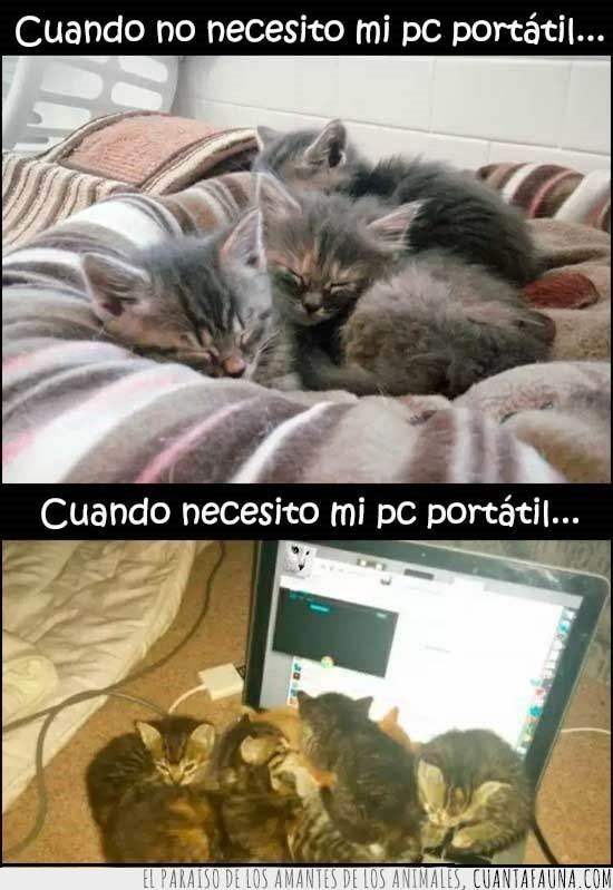 dormir,gatitos,inoportunos,lapto,pc,siempre,utilizar