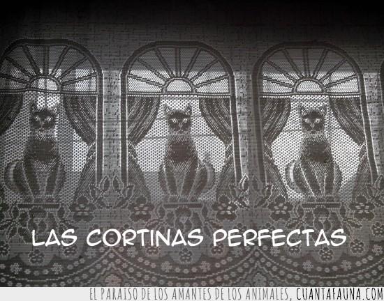 cortinas,gatos,perfectas