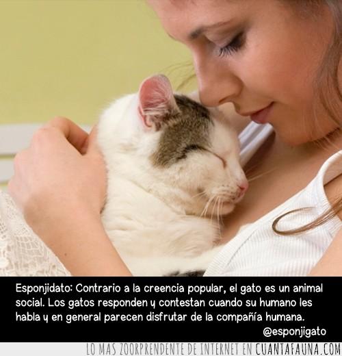 animal,compañia,humano,responder,social