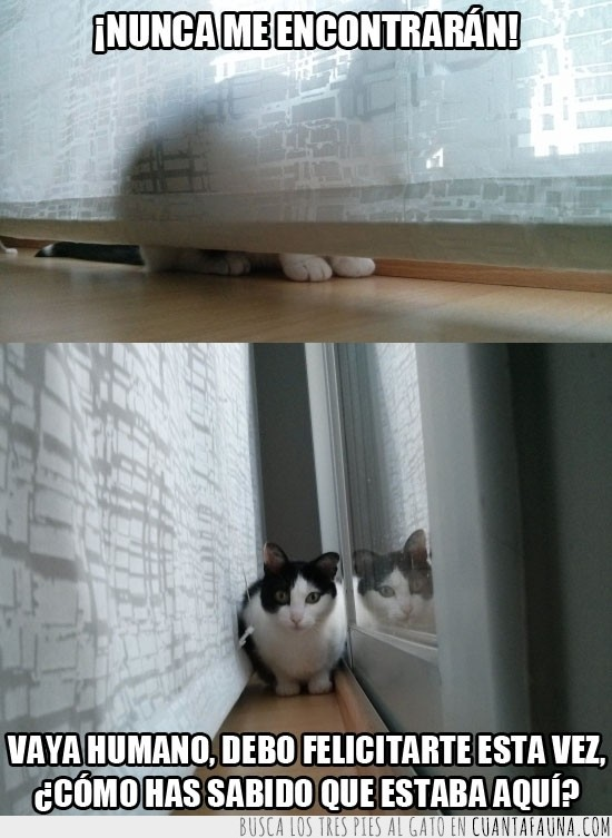 cortina,cortinas,detrás,esconder,sorprendido