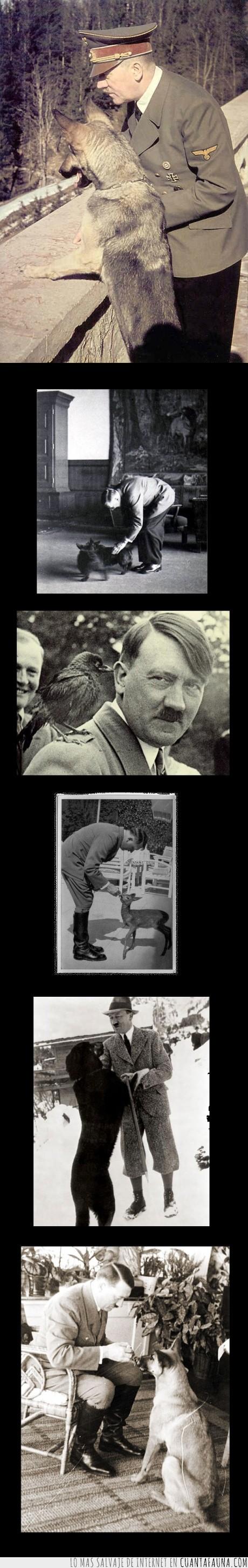 amante,animales,Hitler,odiar,perro,persona,vegetariano