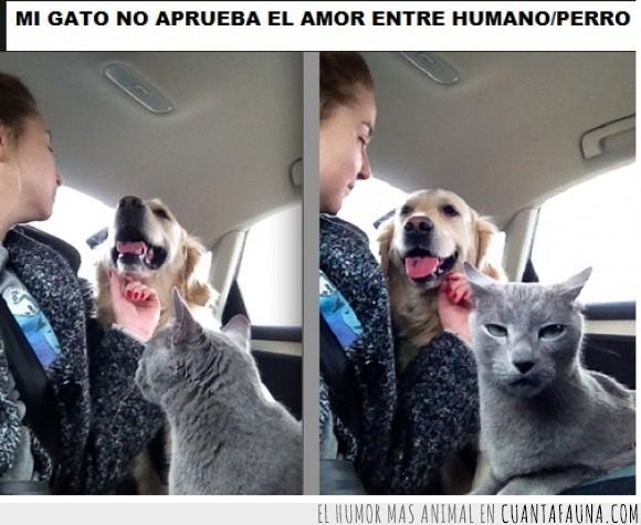 amor,celos,demasiado para cuanto gato,gato,humano,odio,perro