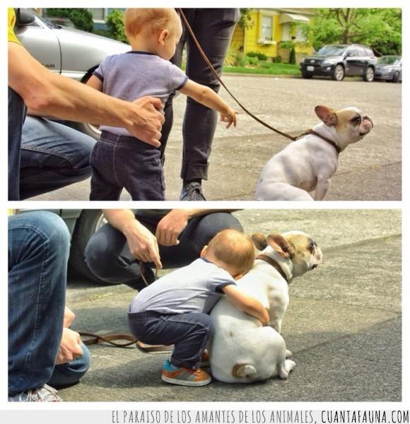 abrazar,bebe,bulldog,conocer,niño,perro,tocar