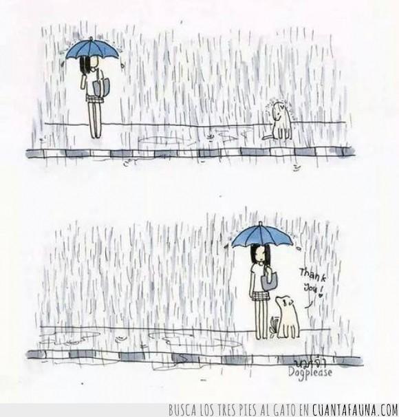 agradecimiento,buen gesto,debería ser algo común,llover,lluvia,paraguas,perro,tapar