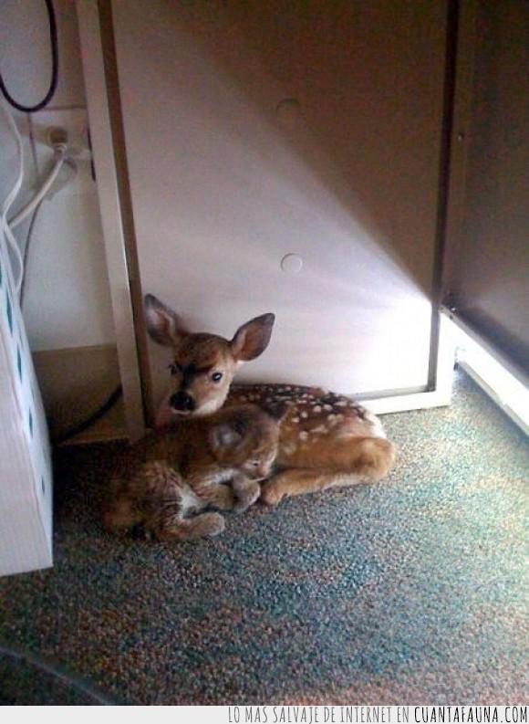 bambi,ciervo,destrucción,gato,incendios