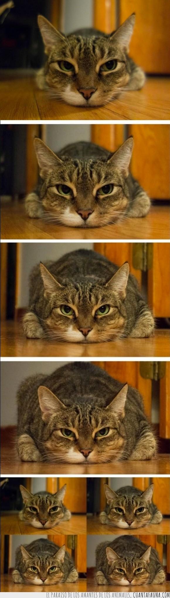 cámara,diferencia,diferente,gato,gordo,lentes,obeso