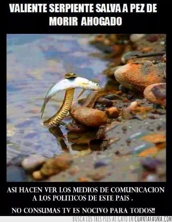 comunicación,corrupción,falso,gobierno,manipulación,medios,nocivo,recesión,salvar,televisión,tv,víbora