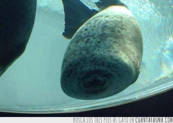 aun así parece feliz,cristal,foca,rollito de primavera,sin cara